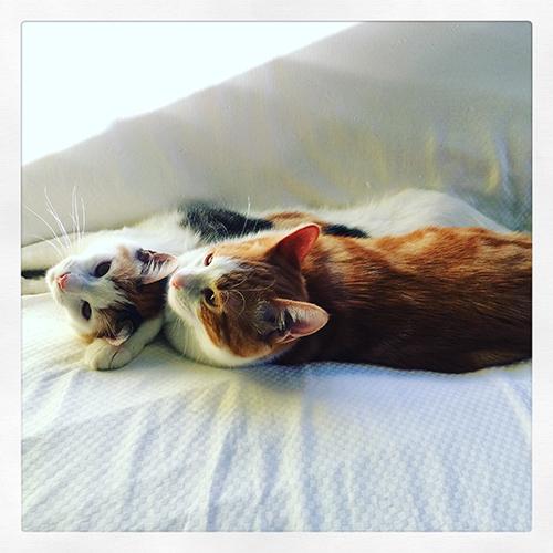 Flame and Bobbi Kittens