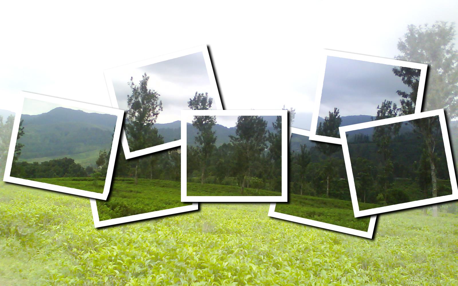 Frame Effect Photoshop Frame Design Amp Reviews