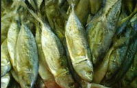 Ciri Ciri Ikan Peda Yang Baik