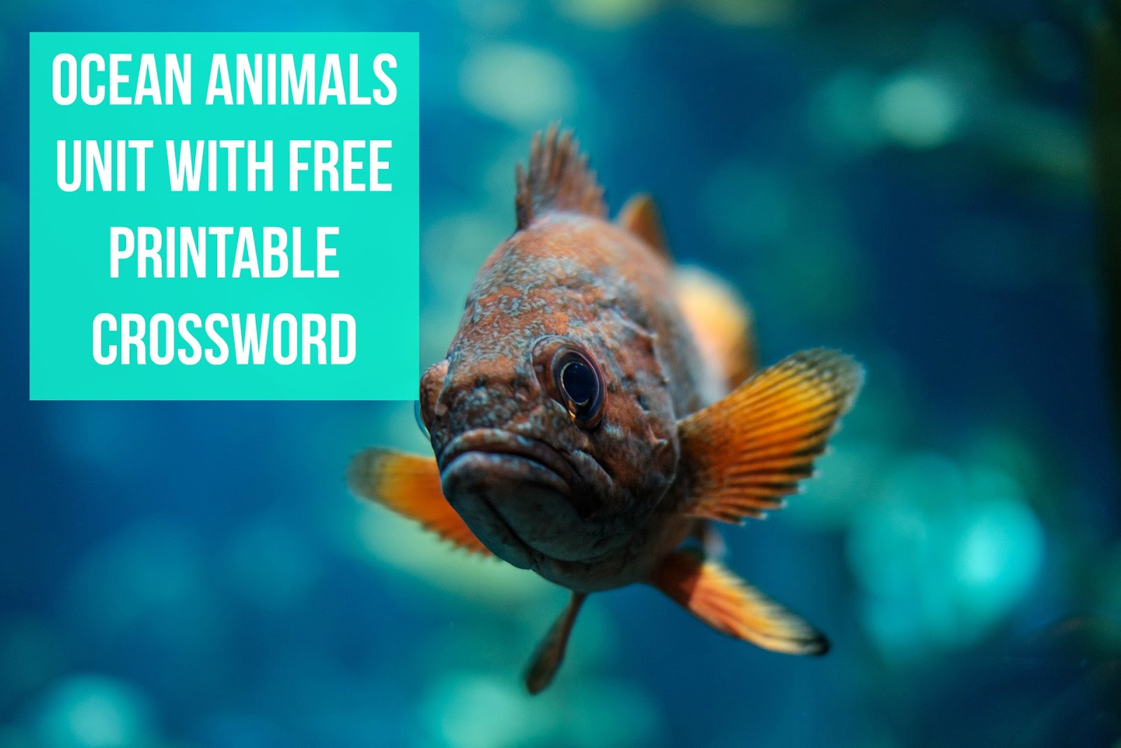 Ocean Animals Unit With Free Crossword Puzzle Printable
