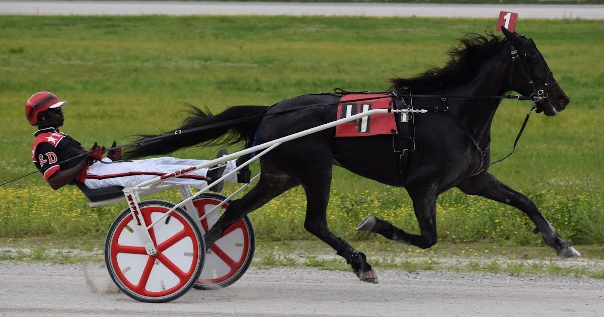 harness racing grand circuit 2016 chariot racing
