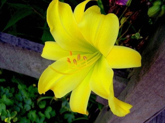 Different types of flowers with names different types of flowers with names image gallery mightylinksfo
