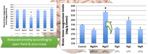 Magnesium - Beyond Bioavailability: Bioaccumulation in the Brain 1.2-Fold Higher for Mg-Taurate | No Effect on Muscle 6