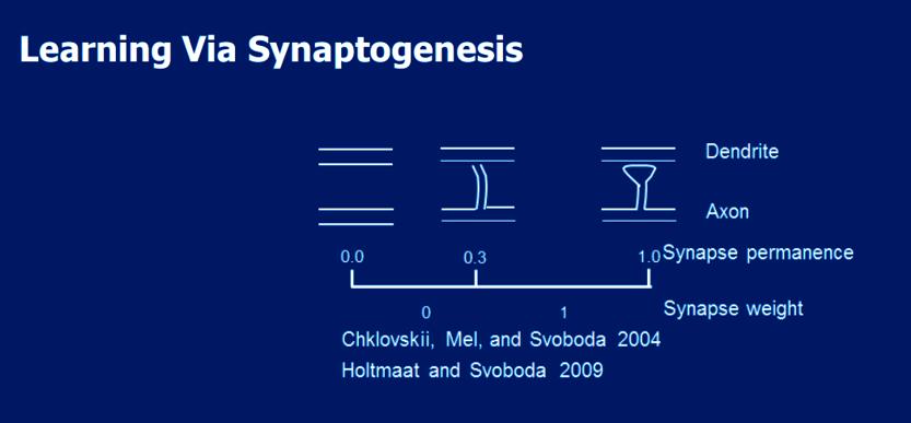 Synaptogenesis