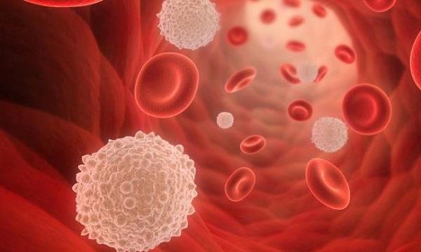 Jumlah Sel Darah Putih Normal Yang Baik Untuk Tubuh Kita