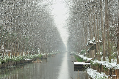 Wetland Park in winter - Anhui province