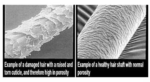 The nerdy curly girl hair porosity 101 why is it so confusing as you see in the photo to the top theres huge differentiation between all three levels of porosity urmus Choice Image