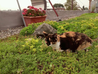 Shop Cat Poly on the Green Roof at Stein Your Florist Co.