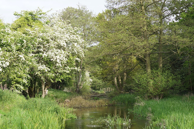 The Norfolk countryside in spring