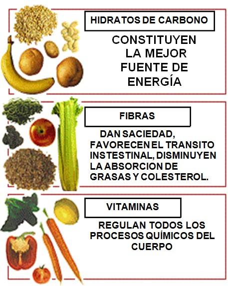 Resultado de imagen de Funciones de los principales nutrientes en el organismo