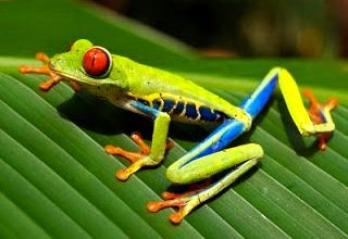 Foto de una rana pequeña de varios colores