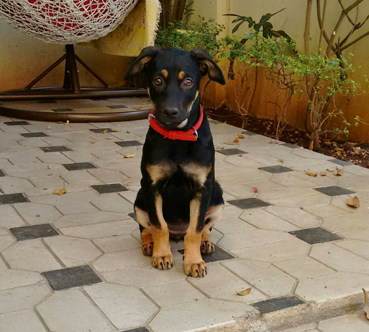Adopt An Indian Stray Dog/cat And Bring Home Joy And Happiness