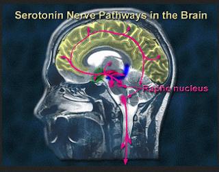 Penemuan Ilmuan Tentang Zat Kimia Pada Otak Penyebab Gay