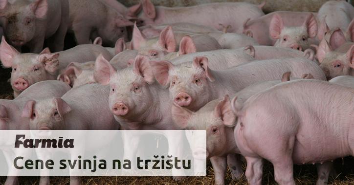 Upoznavanje svinja