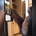 mono usa instagram y causa asombro en todo el mundo