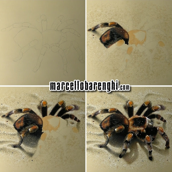18-3D-Tarantula-Spider-wip-Marcello-Barenghi-Exploring-Tiny-Details-of-Hyper-Realistic-Drawings-www-designstack-co