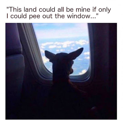 This land could all be mine if only I could p*e out the window