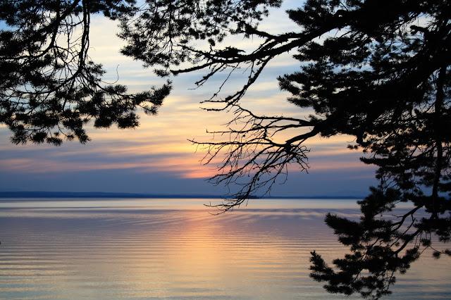 sunset,solnedgång,träd,fjell,tall,sjö,storsjön,jämtland,
