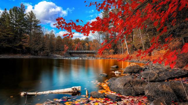 Meer in de herfst met rode bladeren aan de bomen en in het water.