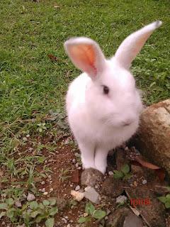 ipink peter rabbit kelinci milik admin pojok asyik