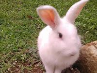 Peter Rabbit Sebuah Review Film Dari Pecandu Kelinci