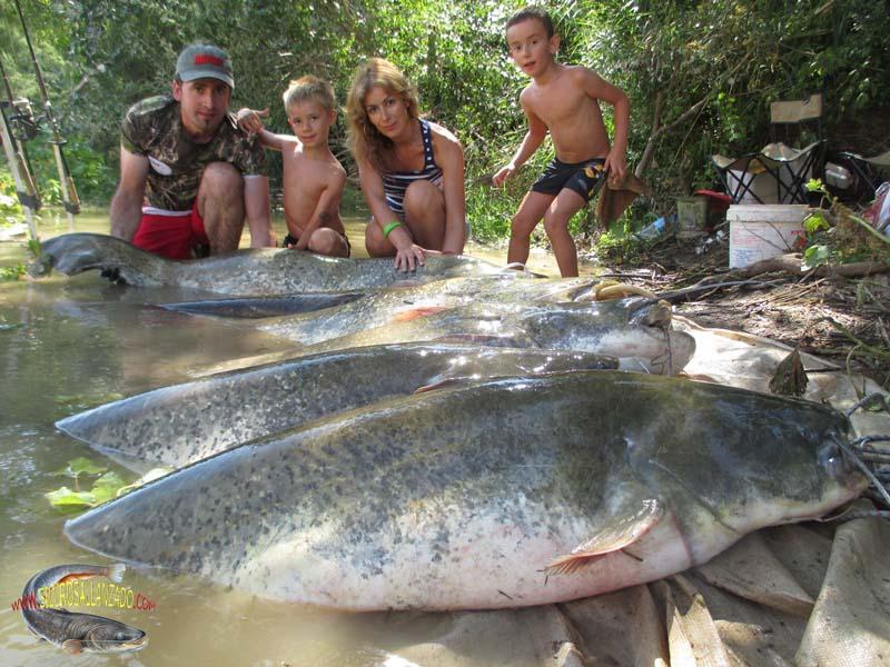 Pesca Con Guía Del Siluro Al Lance Y Pellets En Mequinenza Y Río Ebro Guía De Pesca Del Siluro