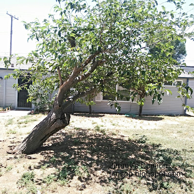 Tree leaning in backyard of our home