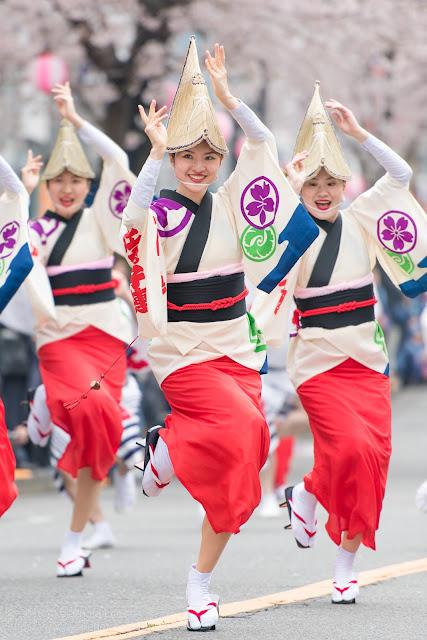 せいせき桜まつり、桜が咲く中阿波踊りを踊る女性の写真
