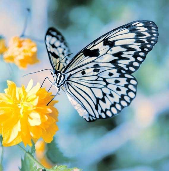 Macam Macam Penyerbukan Pada Bunga Generasi Biologi