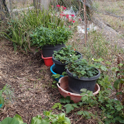 eight acres: garden and herb posts on the blog in 2015