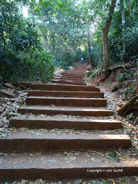 Stairs going through Forest of Nandi Hills, Bangalore