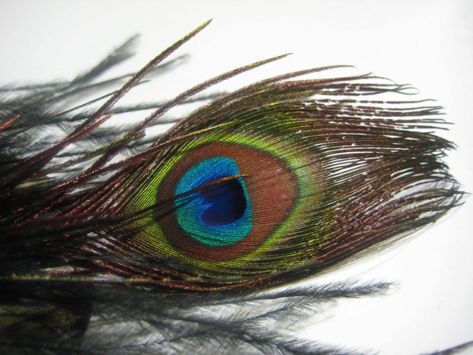 tocado edurne con pluma de pavo real teida