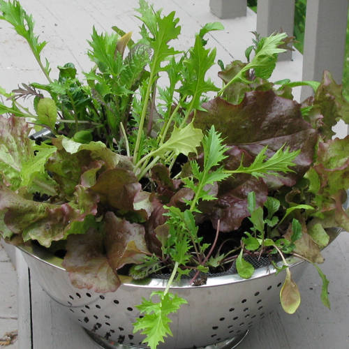 Lettuce Container Garden: Celebrate Earth Day With Spring Projects, Including Easy