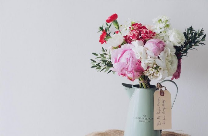 How to Pick the Perfect House Plant for Positive Energy