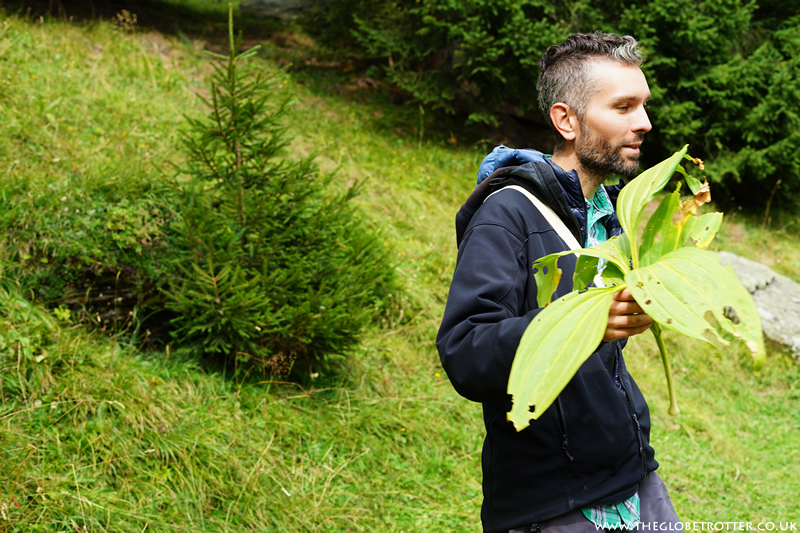 Plant and herb tasting walk around Lake Retaud