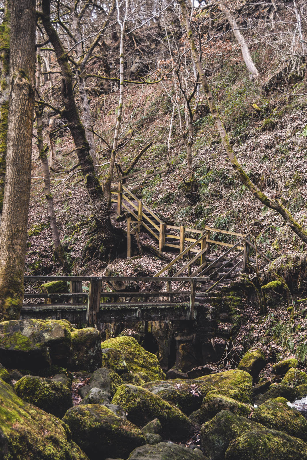 woodland footbridge in peak district
