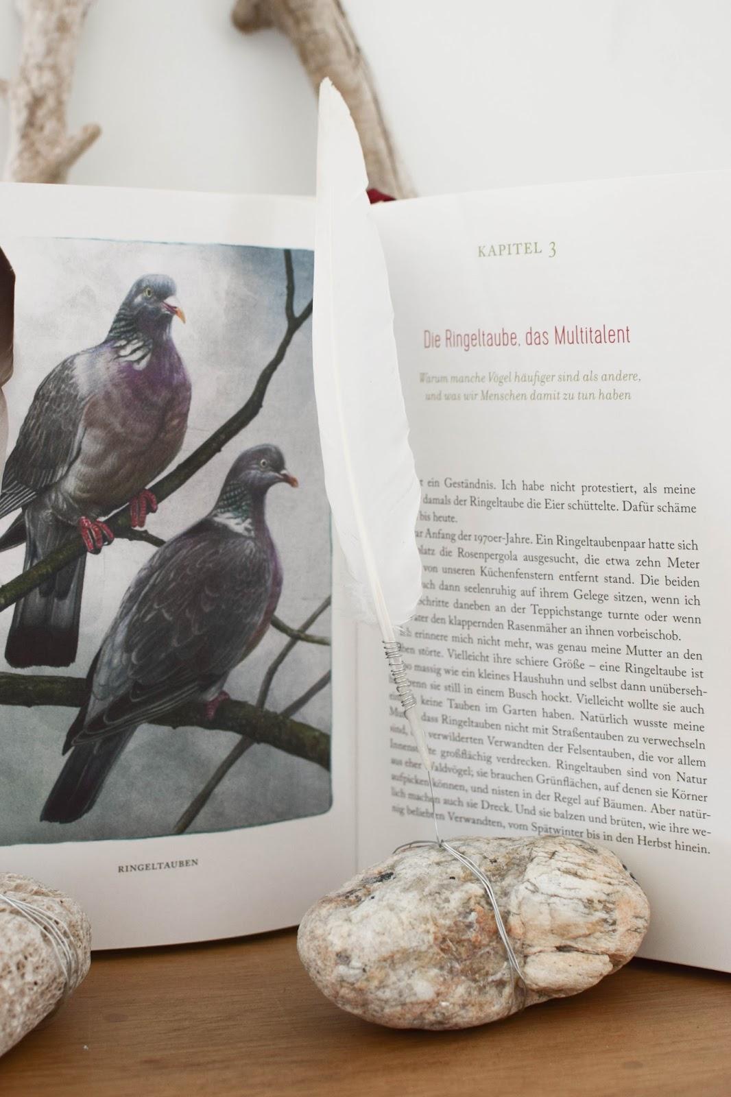 Federn Deko basteln mit Draht Stein Treibgut. Buchtipp: Federnlesen vom Glück Vögel zu beobachten Johanna Romberg Lübbe Verlag