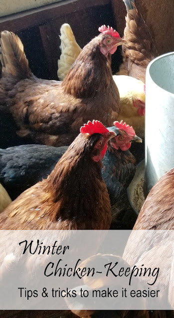 Winter Chicken-Keeping, Tips and Tricks to Make it Easier | Oak Hill Homestead