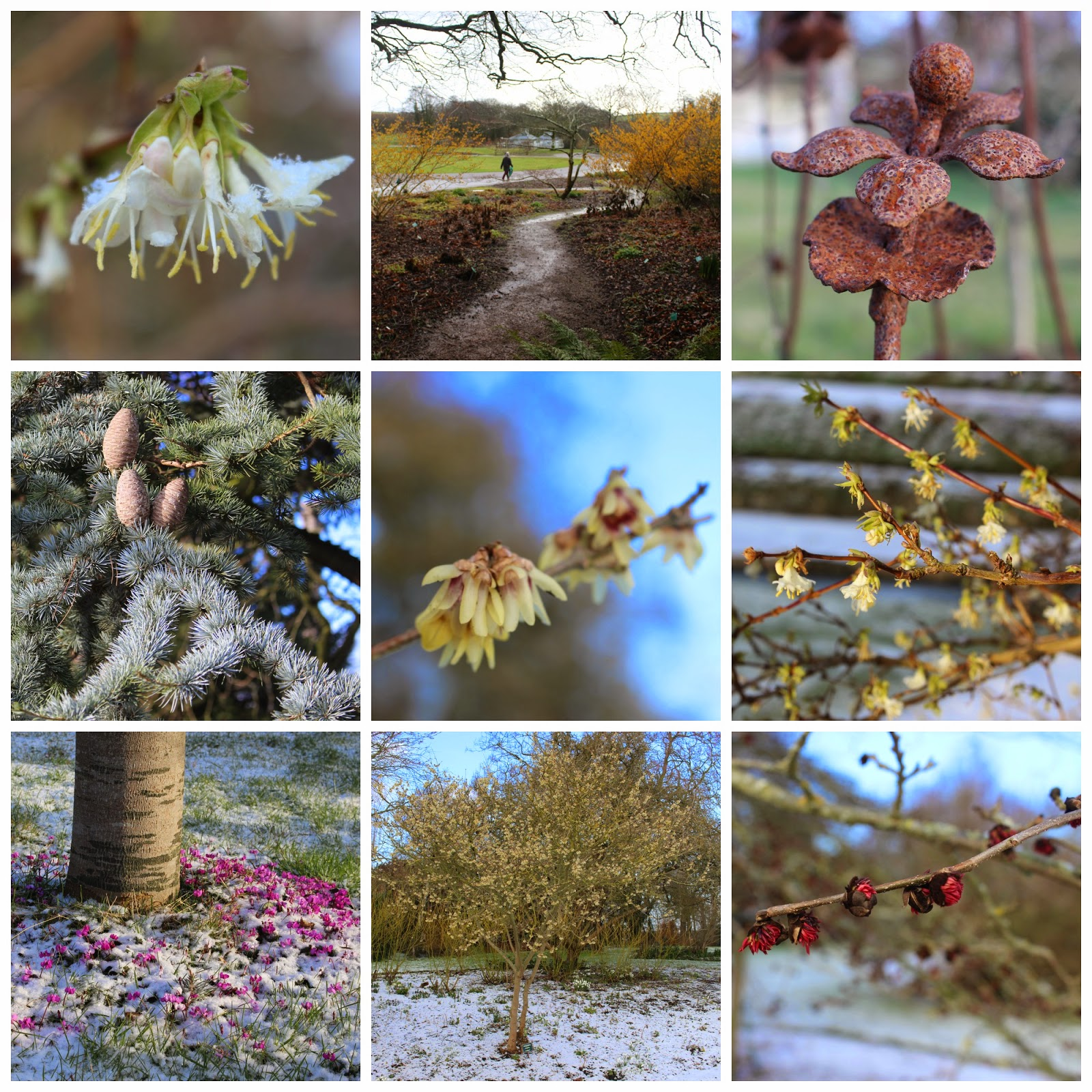 Collage of winter flowers, cones and ironwork