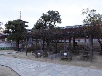 四天王寺境内 藤の木 ベンチ