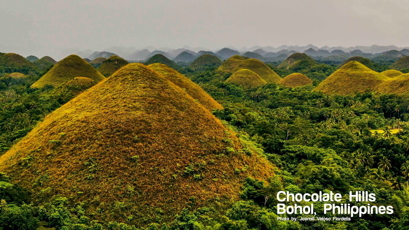 Bohol: A Thousand Chocolate Hills, Green Landscapes, Tarsiers, and ...