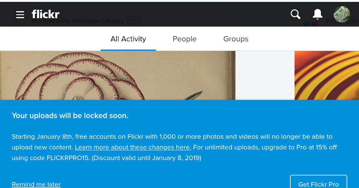 Free Flickr accounts with 1000 or more photos will be locked