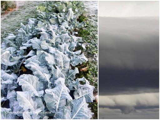 Brócoli escarchado / Nubarrones de tormenta - Chacra Educativa Santa Lucía