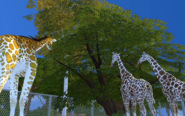 enclos girafes sims 4