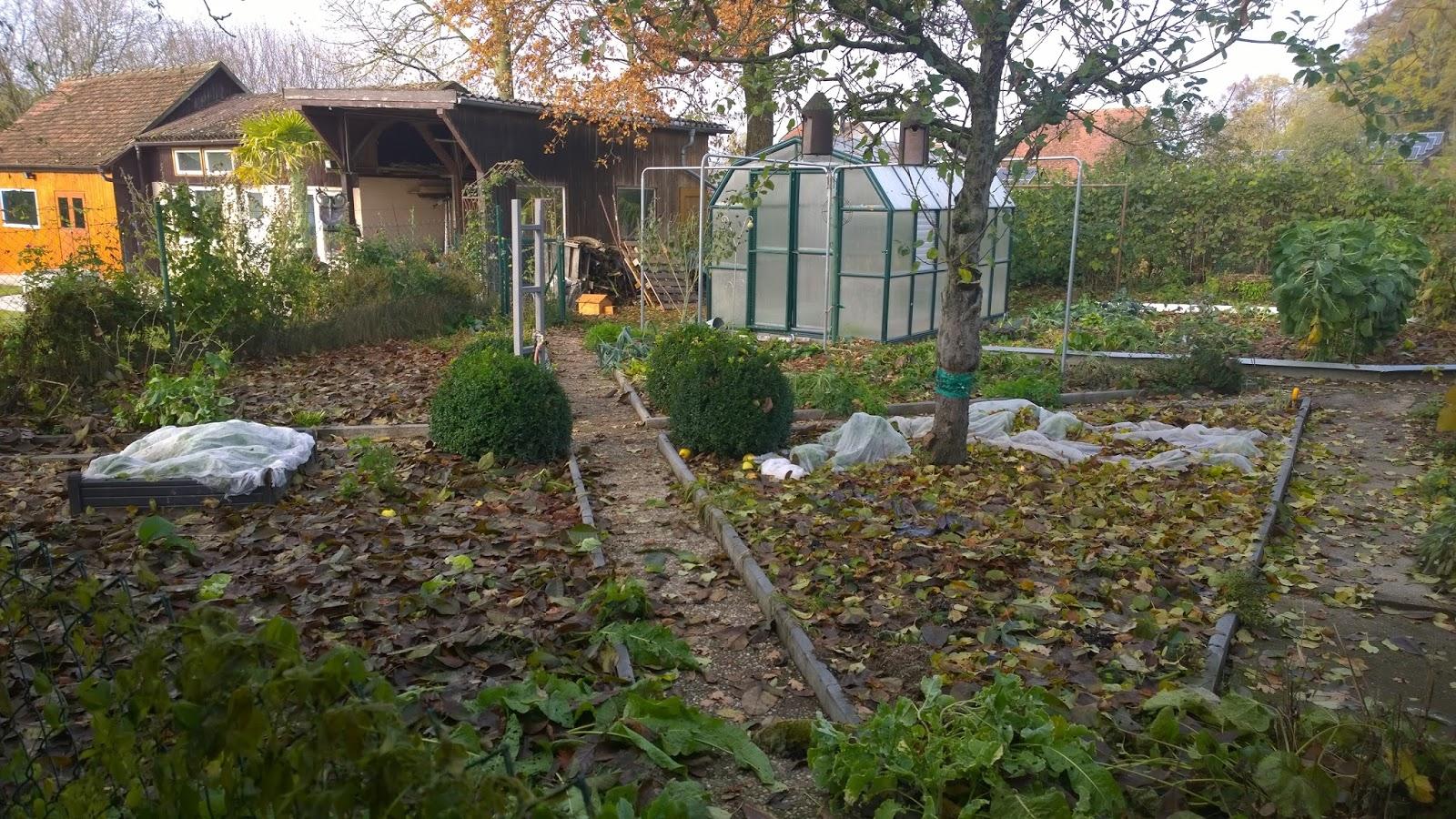 achimsgarten der selbstversorger und garten blog eigenes frisches gem se aus dem novembergarten. Black Bedroom Furniture Sets. Home Design Ideas