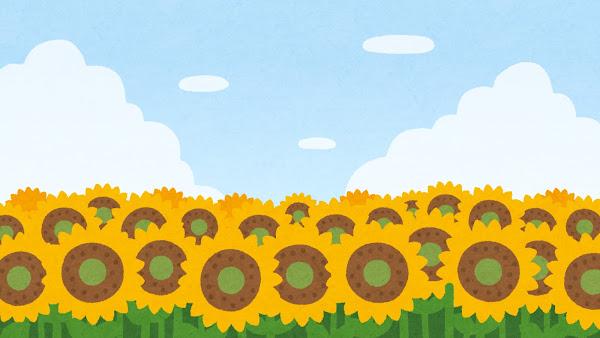 ひまわり畑のイラスト(背景素材)