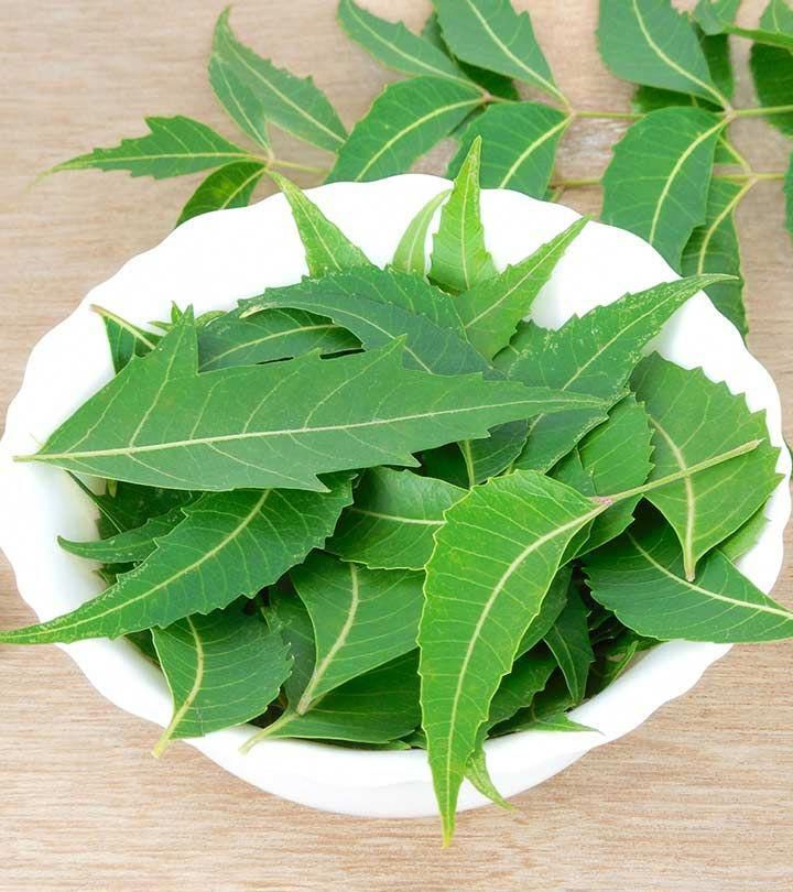 Nim Tree Leaves 50 Beauty Tips For Face Pimples Naturally Remove