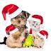 Natal Animal acontece no próximo domingo