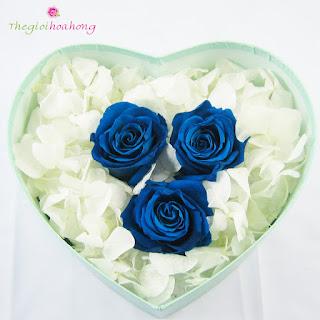 Hộp trái tim hoa hồng xanh