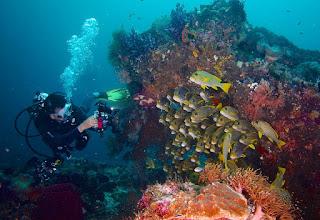 Spot Diving bawah laut raja ampat papua